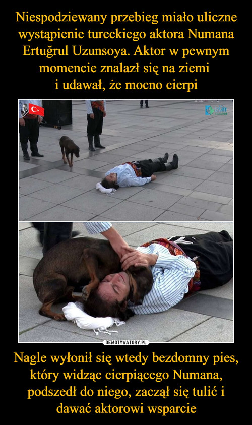 Niespodziewany przebieg miało uliczne wystąpienie tureckiego aktora Numana Ertuğrul Uzunsoya. Aktor w pewnym momencie znalazł się na ziemi  i udawał, że mocno cierpi Nagle wyłonił się wtedy bezdomny pies, który widząc cierpiącego Numana, podszedł do niego, zaczął się tulić i dawać aktorowi wsparcie