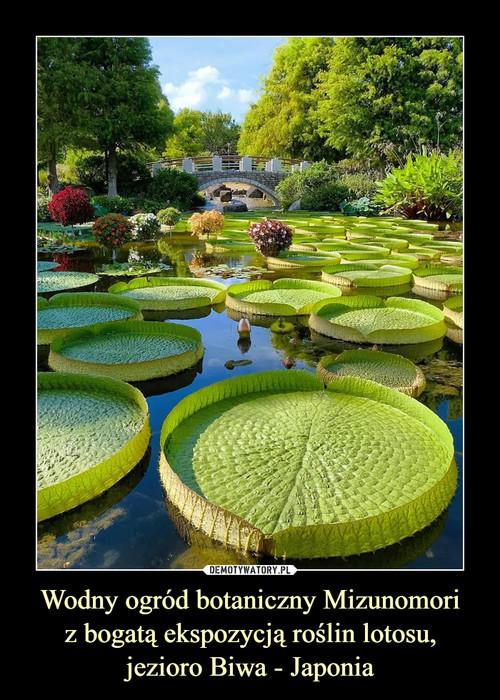 Wodny ogród botaniczny Mizunomori z bogatą ekspozycją roślin lotosu, jezioro Biwa - Japonia