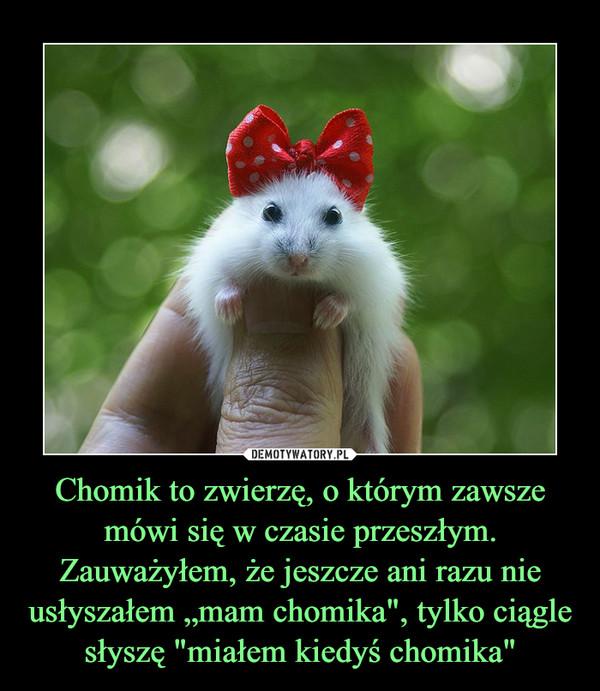 """Chomik to zwierzę, o którym zawsze mówi się w czasie przeszłym. Zauważyłem, że jeszcze ani razu nie usłyszałem """"mam chomika"""", tylko ciągle słyszę """"miałem kiedyś chomika"""" –"""