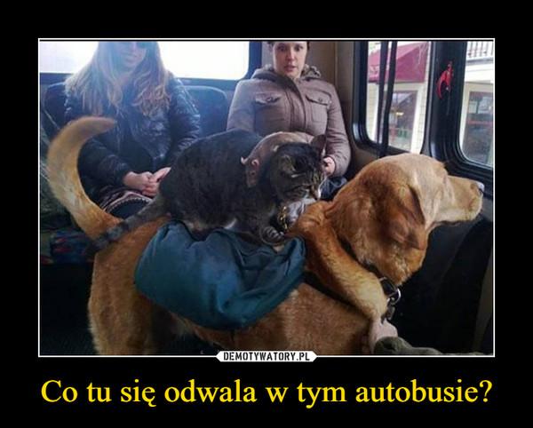 Co tu się odwala w tym autobusie? –