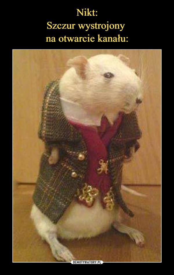 Nikt: Szczur wystrojony  na otwarcie kanału: