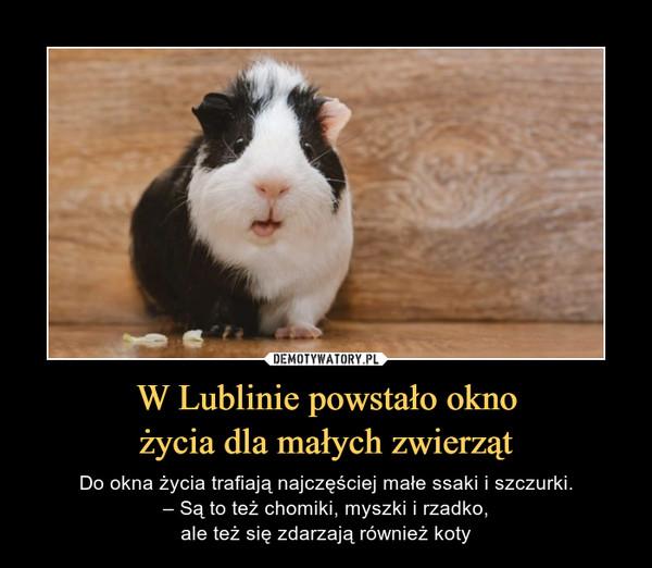 W Lublinie powstało oknożycia dla małych zwierząt – Do okna życia trafiają najczęściej małe ssaki i szczurki.– Są to też chomiki, myszki i rzadko,ale też się zdarzają również koty