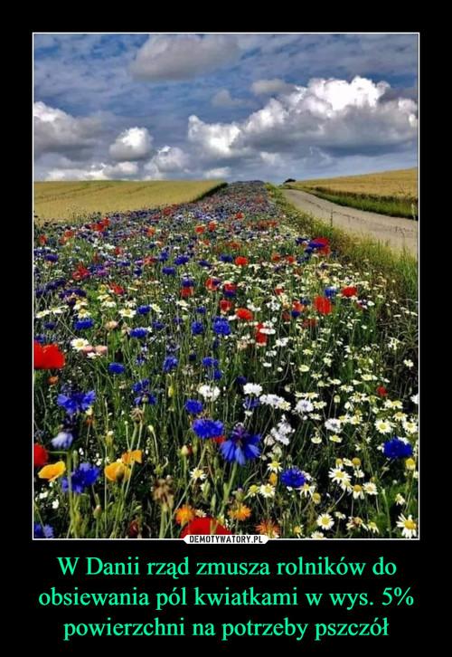 W Danii rząd zmusza rolników do obsiewania pól kwiatkami w wys. 5% powierzchni na potrzeby pszczół