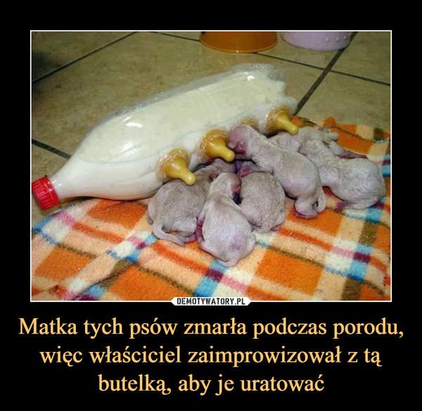 Matka tych psów zmarła podczas porodu, więc właściciel zaimprowizował z tą butelką, aby je uratować –