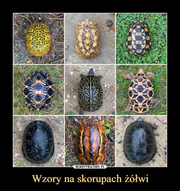 Wzory na skorupach żółwi –
