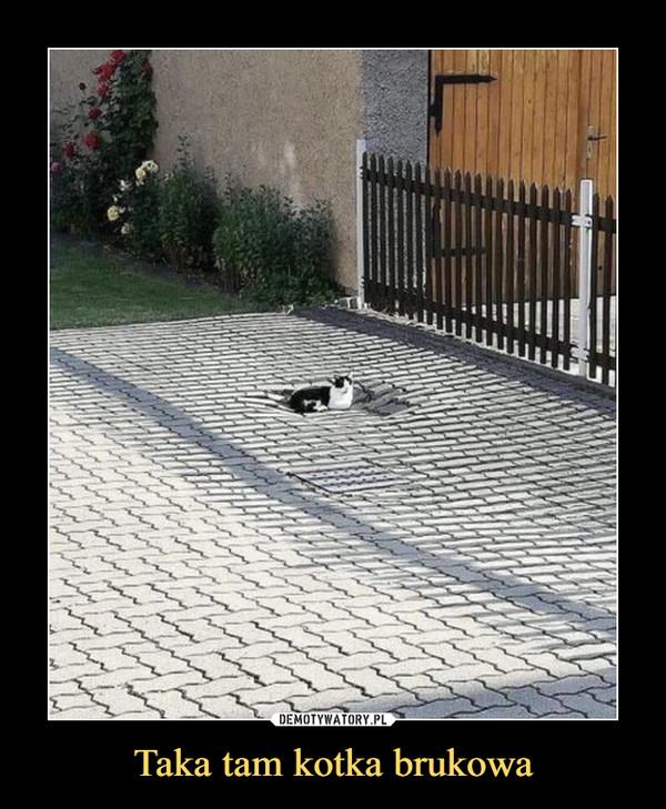 Taka tam kotka brukowa –