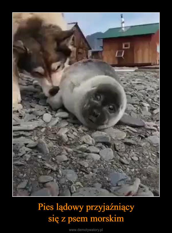Pies lądowy przyjaźniącysię z psem morskim –