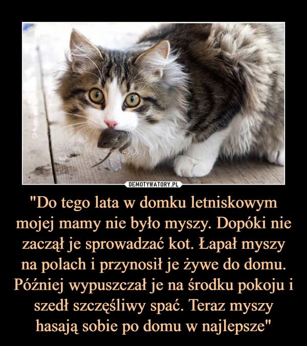 """""""Do tego lata w domku letniskowym mojej mamy nie było myszy. Dopóki nie zaczął je sprowadzać kot. Łapał myszy na polach i przynosił je żywe do domu. Później wypuszczał je na środku pokoju i szedł szczęśliwy spać. Teraz myszy hasają sobie po domu w najlepsze"""" –"""