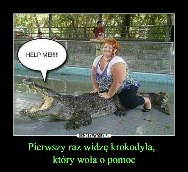 Pierwszy raz widzę krokodyla,  który woła o pomoc –  HELP ME!!!!!