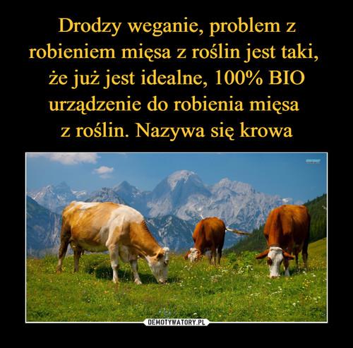 Drodzy weganie, problem z robieniem mięsa z roślin jest taki,  że już jest idealne, 100% BIO urządzenie do robienia mięsa  z roślin. Nazywa się krowa