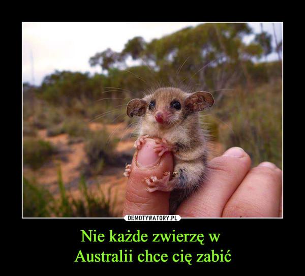Nie każde zwierzę w Australii chce cię zabić