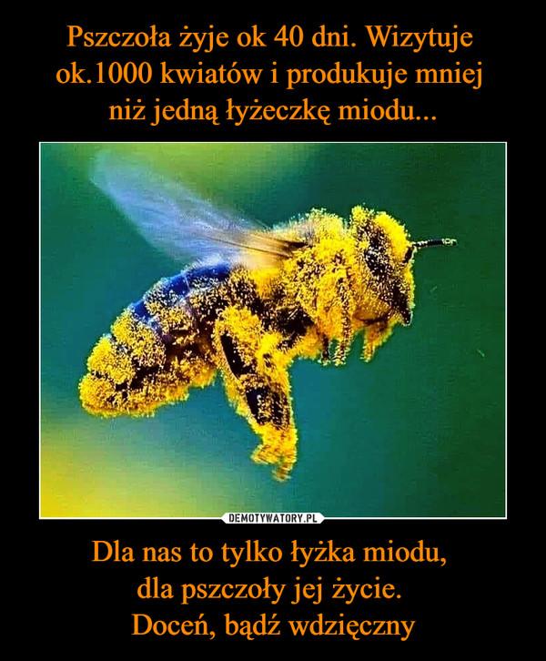 Pszczoła żyje ok 40 dni. Wizytuje ok.1000 kwiatów i produkuje mniej niż jedną łyżeczkę miodu... Dla nas to tylko łyżka miodu, dla pszczoły jej życie. Doceń, bądź wdzięczny